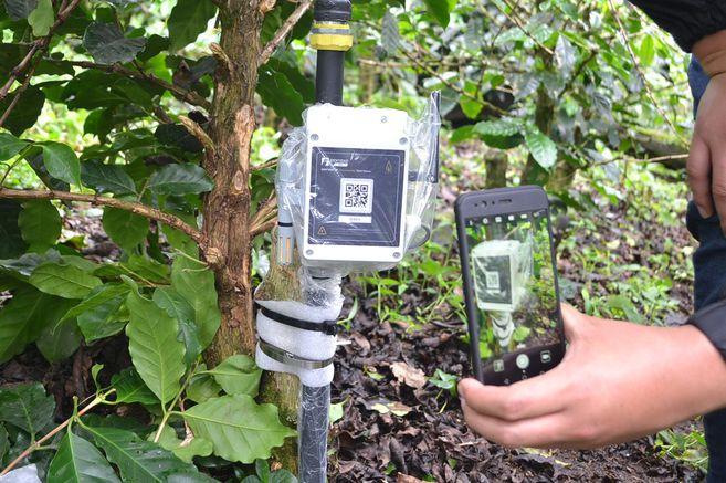 Internet de las cosas avanza en el agro colombiano